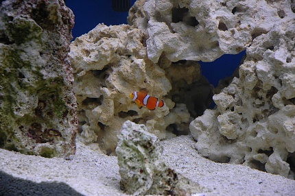 Click image for larger version  Name:Nemo2.jpg Views:40 Size:77.0 KB ID:19764