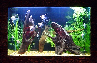 Click image for larger version  Name:11Fish.jpg Views:230 Size:74.1 KB ID:20056