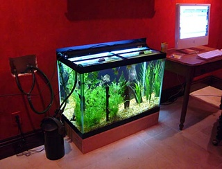 Click image for larger version  Name:Back of Tank.jpg Views:161 Size:69.3 KB ID:20058
