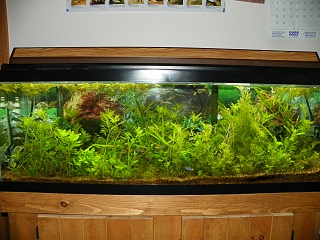 Click image for larger version  Name:grow out tanks 001.jpg Views:92 Size:254.8 KB ID:200979