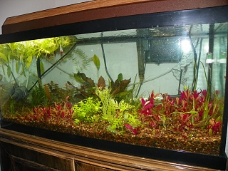 Click image for larger version  Name:grow out tanks 004.jpg Views:70 Size:257.0 KB ID:200980