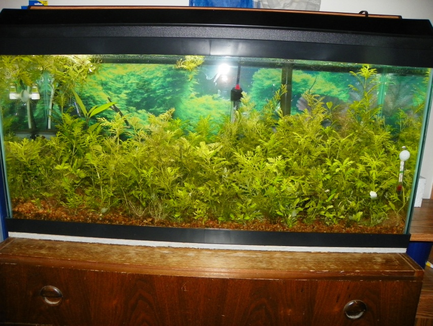 Click image for larger version  Name:grow out tanks 008.jpg Views:84 Size:258.0 KB ID:200981