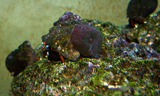 Click image for larger version  Name:mushroom-on-hermit.jpg Views:44 Size:78.1 KB ID:20212