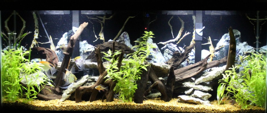 Click image for larger version  Name:Live%20plant%20tank%20pics%20009.jpg Views:185 Size:147.0 KB ID:202245