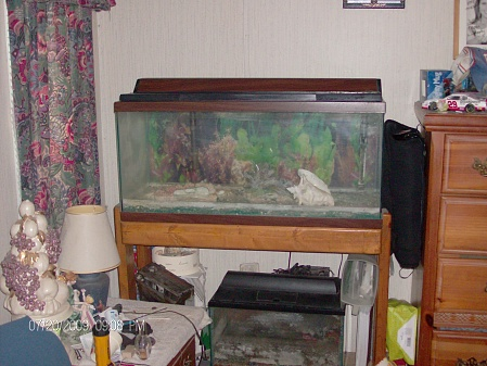 Click image for larger version  Name:fish tank.jpg Views:32 Size:75.8 KB ID:20265