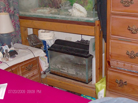 Click image for larger version  Name:fish tank 2.jpg Views:36 Size:76.3 KB ID:20266