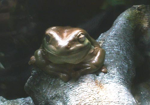 Click image for larger version  Name:frog_1.jpg Views:84 Size:30.0 KB ID:2035