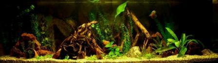 Click image for larger version  Name:6x2x2ft American cichlid.JPG Views:47 Size:44.0 KB ID:20590
