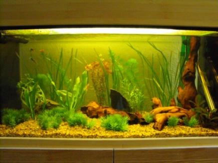 Click image for larger version  Name:fuji fish 007 [].jpg Views:58 Size:58.7 KB ID:20894