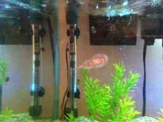 Name:   ImageUploadedByAquarium Advice1387857758.661726.jpg Views: 171 Size:  7.7 KB
