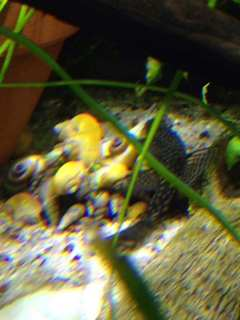 Name:   ImageUploadedByAquarium Advice1388647186.776881.jpg Views: 85 Size:  10.8 KB