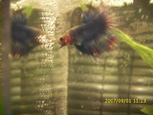 Click image for larger version  Name:new fish 035.jpg Views:32 Size:61.3 KB ID:21488