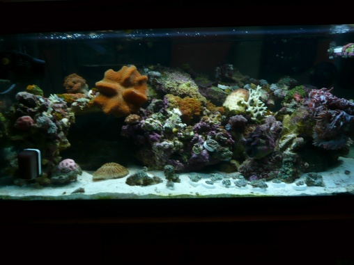 Click image for larger version  Name:for Reef Frenzy 001.jpg Views:42 Size:62.3 KB ID:21515
