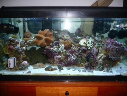 Click image for larger version  Name:for Reef Frenzy 002.jpg Views:46 Size:63.8 KB ID:21516