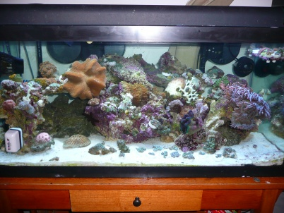 Click image for larger version  Name:for Reef Frenzy 003.jpg Views:52 Size:64.5 KB ID:21517