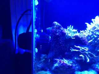 Name:   ImageUploadedByAquarium Advice1388961277.432856.jpg Views: 76 Size:  8.4 KB