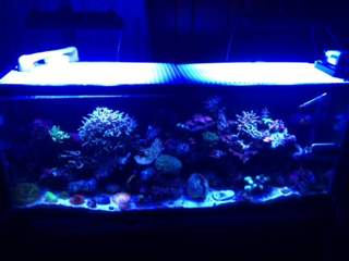 Name:   ImageUploadedByAquarium Advice1389569392.997281.jpg Views: 174 Size:  9.7 KB