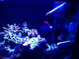 Name:   ImageUploadedByAquarium Advice1389569859.997503.jpg Views: 141 Size:  8.9 KB