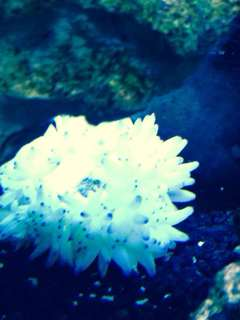 Name:   ImageUploadedByAquarium Advice1390170229.445408.jpg Views: 45 Size:  9.5 KB