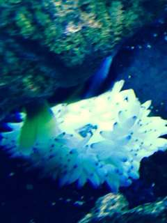 Name:   ImageUploadedByAquarium Advice1390170240.861244.jpg Views: 45 Size:  10.5 KB