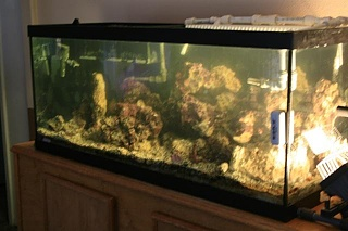 Click image for larger version  Name:fish tank 1 (Small).jpg Views:64 Size:62.2 KB ID:21983