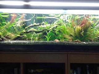 Click image for larger version  Name:33 long shrimp.jpg Views:87 Size:225.9 KB ID:220536