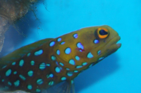 Click image for larger version  Name:jawfish.jpg Views:50 Size:59.7 KB ID:22124