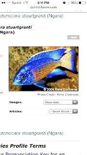 Click image for larger version  Name:ImageUploadedByAquarium Advice1392509551.680757.jpg Views:69 Size:147.6 KB ID:222814