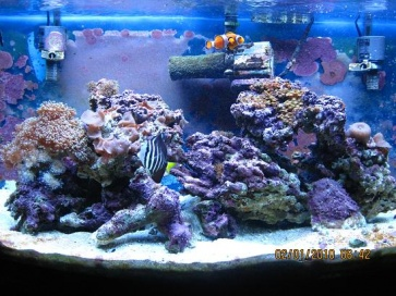 Click image for larger version  Name:New Rock Scaping 2010 small.jpg Views:50 Size:61.7 KB ID:22368
