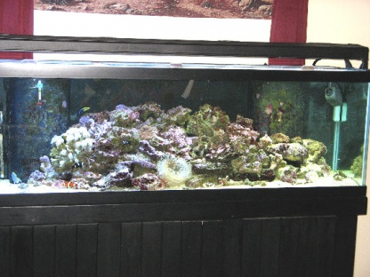 Click image for larger version  Name:New Tank.jpg Views:56 Size:59.0 KB ID:22456
