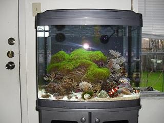 Biocube 29 led retro fit aquarium advice aquarium for 29 gallon fish tank dimensions
