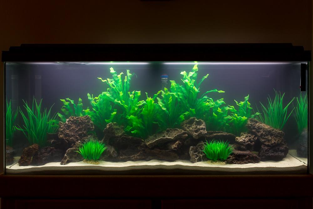 Click image for larger version  Name:Aquarium-2.jpg Views:46 Size:191.2 KB ID:230303