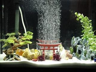 The feng shui fish tank aquarium advice aquarium for Zen fish tank