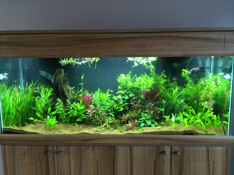 Click image for larger version  Name:tank, march 2014.jpg Views:290 Size:253.8 KB ID:231778