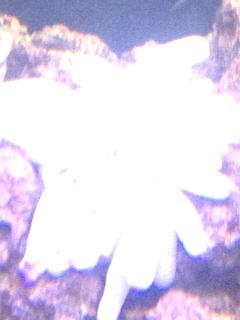 Click image for larger version  Name:ImageUploadedByAquarium Advice1396828403.292843.jpg Views:133 Size:137.5 KB ID:232076