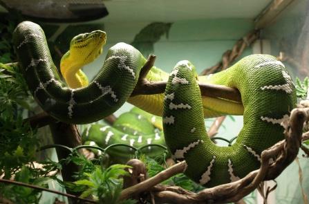 Click image for larger version  Name:snake.jpg Views:51 Size:66.0 KB ID:23227
