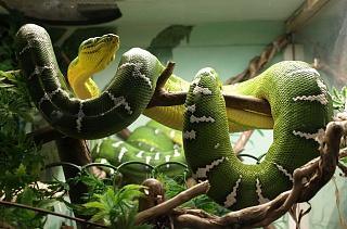 Click image for larger version  Name:snake.jpg Views:55 Size:66.0 KB ID:23227