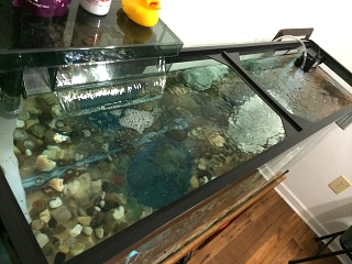 Click image for larger version  Name:Tank 55G Top.JPG Views:65 Size:183.9 KB ID:233140