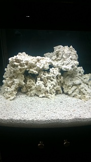 Click image for larger version  Name:1st morning after rock added to tank 2 5-14-14.jpg Views:59 Size:167.6 KB ID:237182