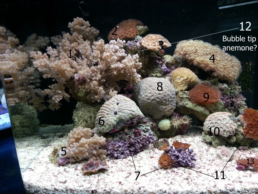 Click image for larger version  Name:coral labeled.jpg Views:197 Size:263.3 KB ID:237461