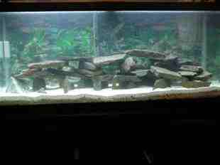 Name:   ImageUploadedByAquarium Advice1400364963.211791.jpg Views: 184 Size:  30.8 KB