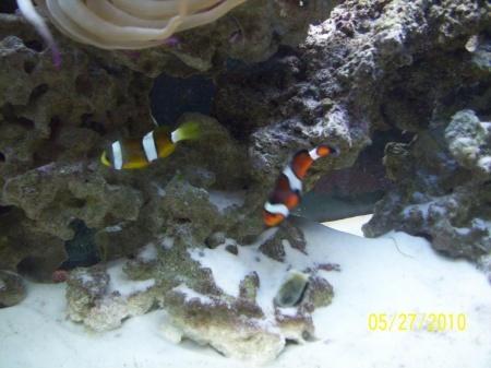 Click image for larger version  Name:fish 006.jpg Views:54 Size:64.5 KB ID:23828