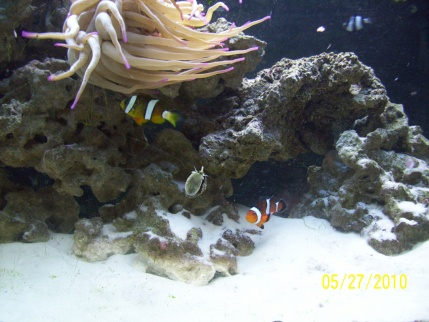 Click image for larger version  Name:fish 004.jpg Views:57 Size:64.2 KB ID:23829