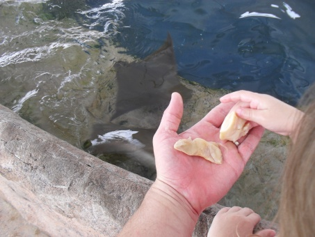 Click image for larger version  Name:sea world and graduation 021.jpg Views:36 Size:63.8 KB ID:24004