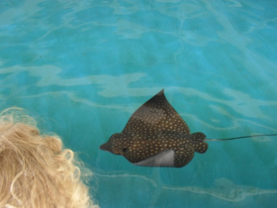 Click image for larger version  Name:sea world and graduation 026.jpg Views:39 Size:55.4 KB ID:24006