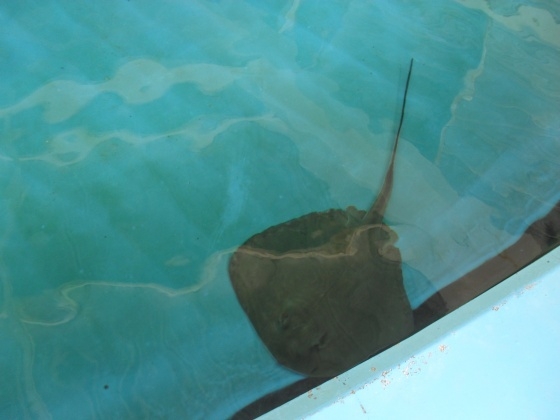 Click image for larger version  Name:sea world and graduation 028.jpg Views:31 Size:50.1 KB ID:24007