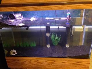 29 gallon mudskipper brackish build rebuild aquarium for 29 gallon fish tank dimensions