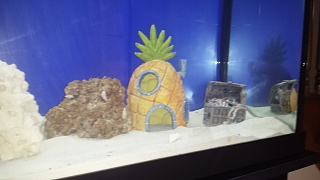 Click image for larger version  Name:hermit crabs on live rock.jpg Views:59 Size:107.1 KB ID:244063