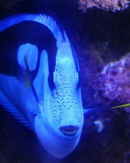 Name:   ImageUploadedByAquarium Advice1406257818.941785.jpg Views: 124 Size:  44.1 KB