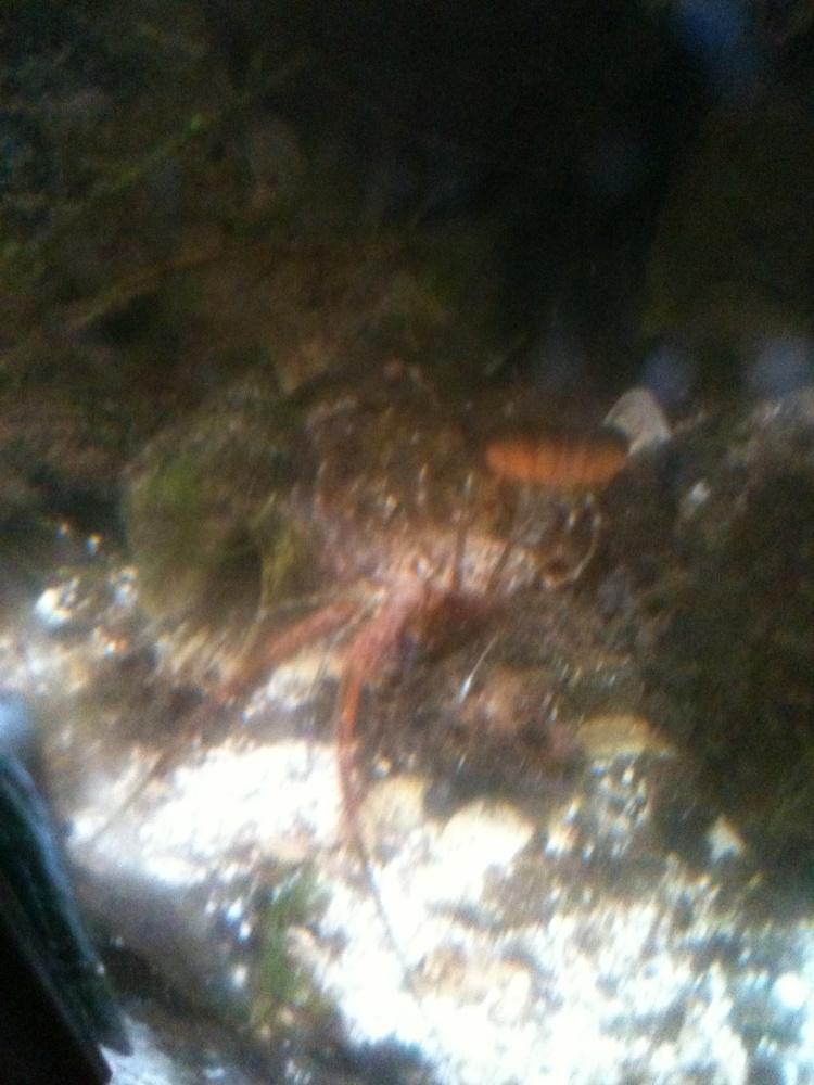 Click image for larger version  Name:stunned shrimp.jpg Views:71 Size:231.8 KB ID:246026